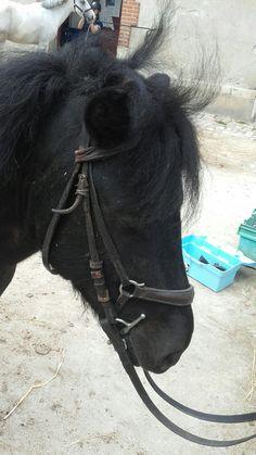 Charles Horses, Animals, Animaux, Horse, Animal, Animales, Animais