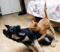 AHHH, MONSTER!! #doggieinstyle