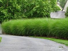 Drought-tolerant, deer-proof Miscanthus Gracillimus is low maintenance, and easy to grow! Small Yard Landscaping, Modern Landscaping, Landscaping Plants, Landscaping Ideas, Garden Pool, Lawn And Garden, Terrace Garden, Small Gardens, Outdoor Gardens