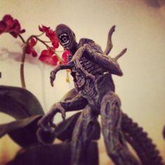 Xenomorph #Aliens #AvP