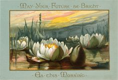 Magnificent Vintage Water Lily Postcard!