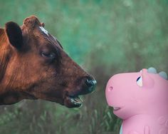 The cow challenged the Dino to a staring contest for 1 minute. 30 seconds have gone by, how long until the contest is over?