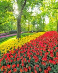 nature garden best place beauty world nice flower landscape amazing travel colorful color spring summer heaven life Paradise love deram cool like pink windows red yellow blue Fruit butterfly brid Paradise Love, Amazing Flowers, Nice Flower, Blue Fruits, Flower Landscape, Instagram Images, Instagram Posts, Tulips, Nature Photography