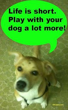 Words of wisdom from the dog! Please share...