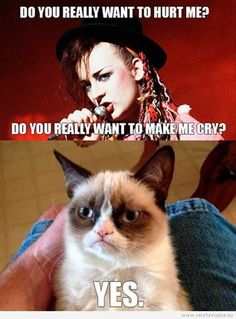 grumpy cat quotes | ... you really want to hurt me, Boy George sings - Yes, grumpy cat replies