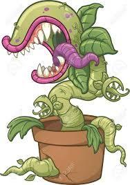Image result for stock illustration carnivorous plants
