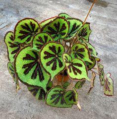 Indoor Garden, Indoor Plants, Cactus, Wonderful Flowers, House Landscape, Textiles, Green Plants, Flourish, Houseplants