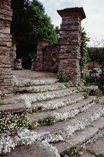 Love the flowers between these steps! Garden Paths, Herb Garden, Garden Landscaping, Summer Garden, Winter Garden, Landscape Design, Garden Design, Grades, Greenhouse Wedding