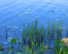 Minnesota summer Summer Wallpaper, Computer Wallpaper, Lakes, Minnesota, Underwater, Summertime, Landscapes, Earth, Wallpapers