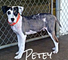 Petey. Im looking for home! Any one want to rescue me?