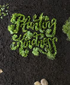 """""""Planting Kindness"""" by Danielle Evans on Typography Served."""
