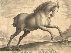 Renaissance engraving of a stallion - reproduction print