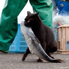 【衝撃画像】 「お魚くわえたどら猫」がガチで激写されるwwwww : 暇人\(^o^)/速報