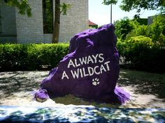 Wildcat Rock @ Northwestern University Go Cats! Another winning football season is ahead of us! (BTW WHY did they have to move the Rock? College Football Teams, Ohio State Football, American Football, University Hall, Ohio State University, College Campus, College Life, Social Emotional Development, After High School
