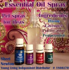 Young Living Essential Oil Flea Spray / Repellent Interested in learning more? I am a Young Living Essential Oils Independent Distributor Find out more about this at: http://xsherix.blogspot.com/2014/06/check-out-young-living-essential-oils.html Want to sign up? My Member ID: 1860270