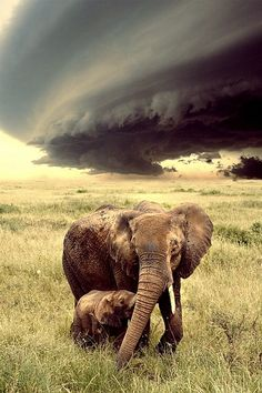 Elephant mum and baby on the Savannah..... #Relax more with healing sounds:
