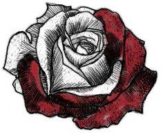 Half Colored Rose