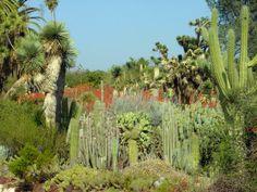 huntington botanical gardens california | Huntington Botanical Gardens, California