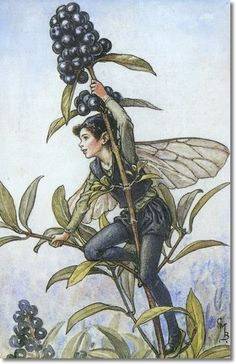 Cicely Mary Barker - Flower Fairies of the Autumn - The Privet Fairy Archival Fine Art Paper Print