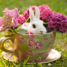 A real bunny inside of a teacup and everything else that an Alice In Wonderland themed wedding brings! Bella Rose Photography