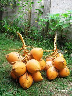 """кокосы королевские - отличный, прямо-таки """"королевский"""" завтрак, если вы в тропиках Pumpkin, Outdoor, Outdoors, Pumpkins, Butternut Squash, Squash, The Great Outdoors"""