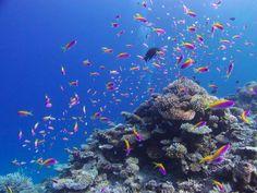 ラーム環礁