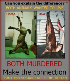 Oh no!  We ate horse meat instead of cow meat!- Think people what makes one any worse than the other? Nothing!!
