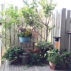 アンティークフェア/アンティーク/古い物/DIYウッドデッキ/DIYフェンス…などのインテリア実例 - 2015-06-04 07:52:42   RoomClip(ルームクリップ)