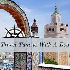 Travel Tunisia With A Dog - daisy Islamic World, Dog Travel, Taj Mahal, Religion, Asia, Europe, Adventure, Muslim, Dogs