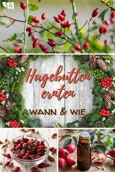 Harvesting rose hips: when and how? Christmas Wreaths, Xmas, Christmas Ornaments, Herbal Plants, Herbal Essences, Harvest Time, Edible Flowers, Trees To Plant, Planting Flowers