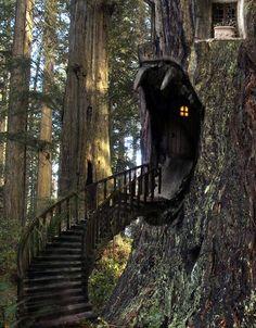 Tree House Stairway, The Enchanted Wood photo via enpundit
