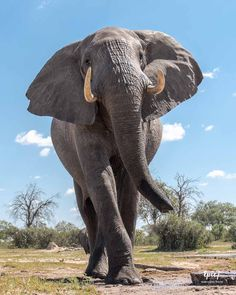 African Safari Animals Ultimate Photography Guide: 33 Photos, Tips & Facts - Epic7Travel.com Adventure Travel Blog