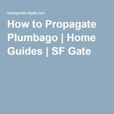 How to Propagate Plumbago | Home Guides | SF Gate