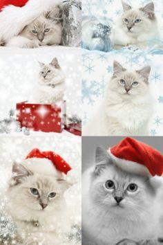 Christmas Cats TV