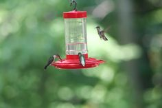 More at the feeder