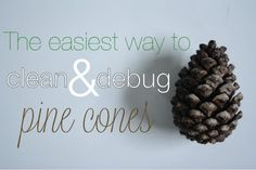 urbane jane.: The easiest way to clean pine cones for crafts & decor.
