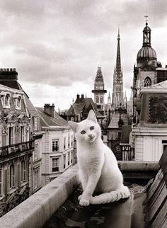 Un gatto e Parigi