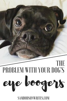 Find out if your dog's eye boogers are a sign of a bigger problem.