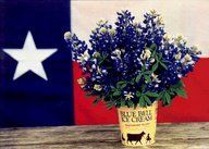 Bluebonnets, Blue Bell Ice Cream and the Texas Flag = Heaven