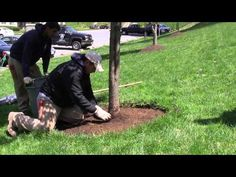 How to Mulch a Tree - My Green Montgomery