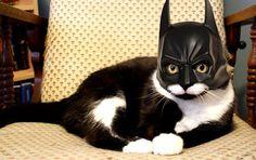 Bat Cat..