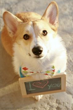 I Love You Too #corgi