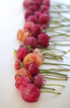 Gallery & Inspiration | Picture - 721307. Ranunculus