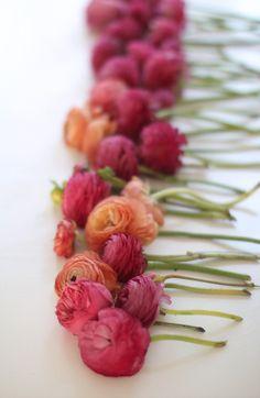 #pink and orange ranunculus...