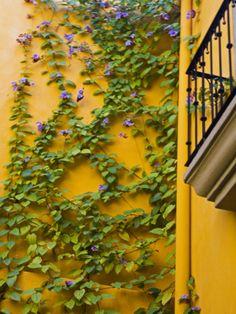 vine covered walls