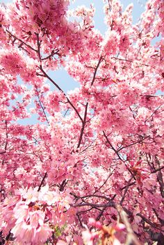 We're so excited to see the cherry blossoms :)