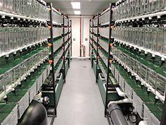 Research Aquatics Gallery Aquarium Sump, Home Aquarium, Shrimp Farming, Fish Farming, Betta Tank, Fish Tank, Baby Betta Fish, Aqua Viva, Shrimp Tank