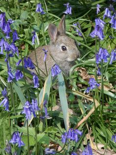 Easter bunny at Winkworth