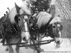 Sleigh Horses in Vermont  by yuyufan43 on deviantART