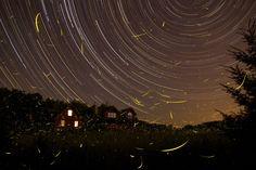 In beeld: vuurvliegen en sterrensporen